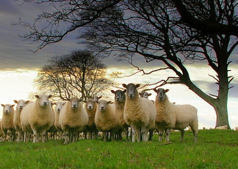 Sheep Without A Shepherd The Millennial Pastor